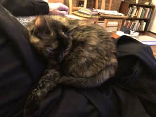 Noami, one of our lap warmers