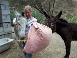 Housetting Donkeys in Coin/ Andalucia