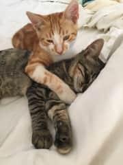 Kittens in Greece....on my bed! 🥰