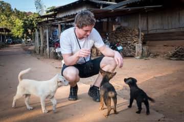 Little wild street dogs in Thailand