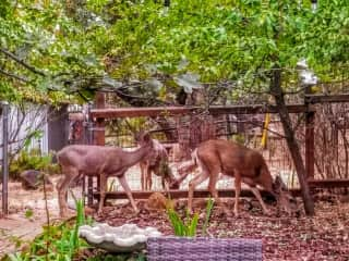 Just a few of the quiet neighbors.