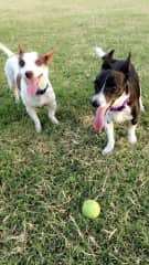 Our dogs, Toby & Bella