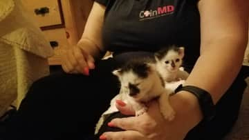Helping my friends feed their six-day-old rescued kittens