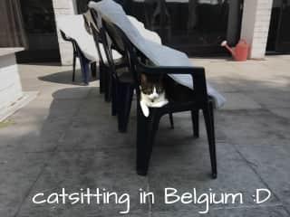 my favorite cat in belgium
