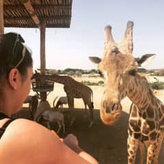 Kalika on safari with the giraffes