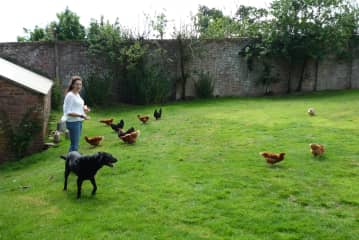 Feeding the chickens at Downes House with Misty helping.