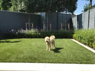 Logan in the back garden