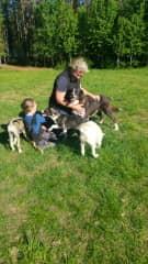 Time for cuddling huskies