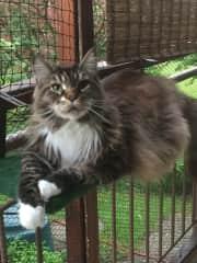 Elliot on our safe cat terrace. he enjoys the sun