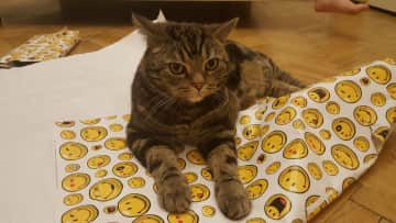 Garfield likes wrapping paper