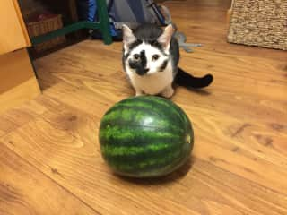 Caliban meeting a watermelon