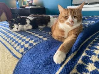 Garfield and Chloe