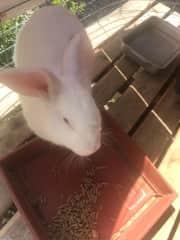 Nossa coelhinha Pipoca