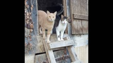 My friend's kitties that I looked after in France. They were outdoor cats mostly and super affectionate.