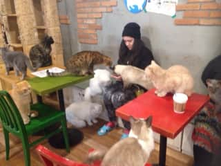 Kalika with some very cute cats in Korea