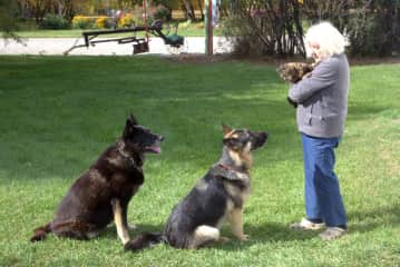 Maria is explaining the dogs, they have to be nice to the cat.