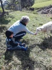 Feeding one of my five sheep