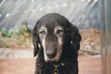 Pepper, our last dog, who we miss dearly