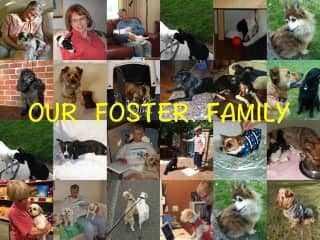 Fostering makes for experience with such a variety of pets. Loved every one.