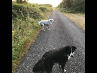 Oilainand Scat out for a walk