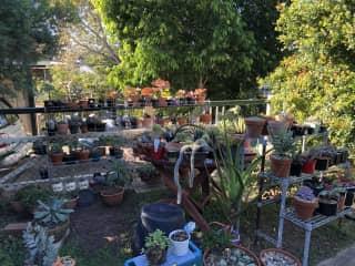Our pot plants