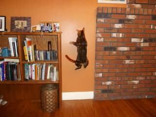 Salome, climbing the walls, literally