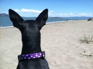 Cassie ponders life