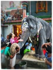 This is Laksmi. We had a real connection. I spent about 5 min w her & she kept hugging me with her trunk :)