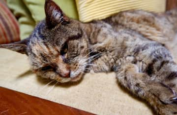 Phoebe 20 years old - Pet sitting in Costa Rica 2019. I enjoy taking photos of our little pets as souvenirs and so I  can send updates to the owners...