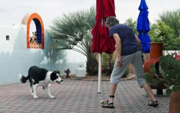 Playing with JAX, wonderful Border Collie, petsitting in Tubac Arizona