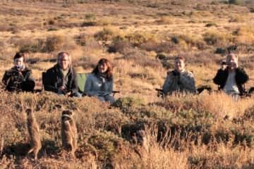 Meerkat encounter South Africa