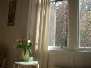 Spring blossom at my bedroom window
