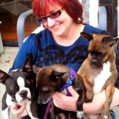 Hi! I'm Leanne pictured here with Gizmo the Boston Terrier along with Mr Bucks (middle) and Rosey (right) who I fostered for quite some time before they found their forever homes.