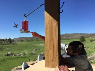 Hummingbirds on the back porch