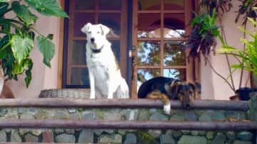Darcy and Ruby on the front steps