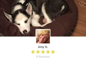 This is my dog, Blaze. But this also shows my profile from Rover, a pet sitting app. 5 stars!