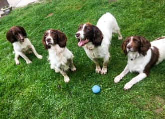 Paddy, Rosie, Ella, and Blossom (France)