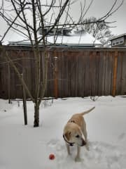 She loves the snow!  And her ball.  Best thing is to play with the ball in the snow!