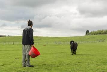 Feeding horses in Englad