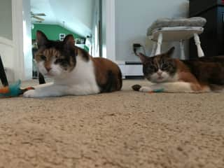 Kittie and Tinkie are sisters.