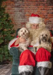 Coco and Mocha's first birthday and Santa visit