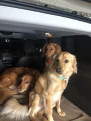 Kaya, Ollie and Bert