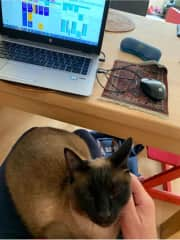 I am happy to combine working from your home with looking after your cat(s)