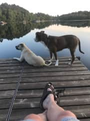 My regal Duncan, a Pit Bull mix rescued from the streets of Minneapolis along with Sammie--just chillin' on our dock at the lake.