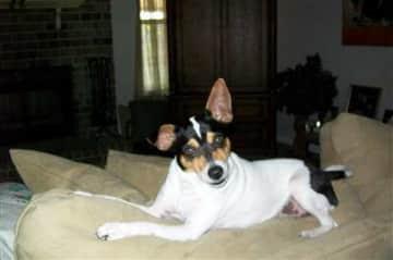 Stella - my dog