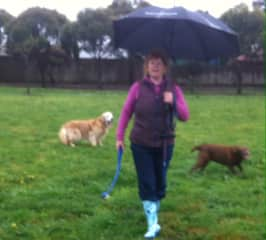 Come rain hail or shine.... dogs need their exercise.