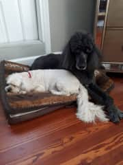 Bentley and Sebastian from St. Pete Florida