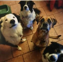 4 of our wonderful dogs, only 1 is still with us now