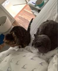 morning cuddles