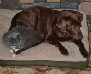 Blake and Molly